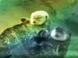 Otters, cute otter in love holding hands { Moxie Media