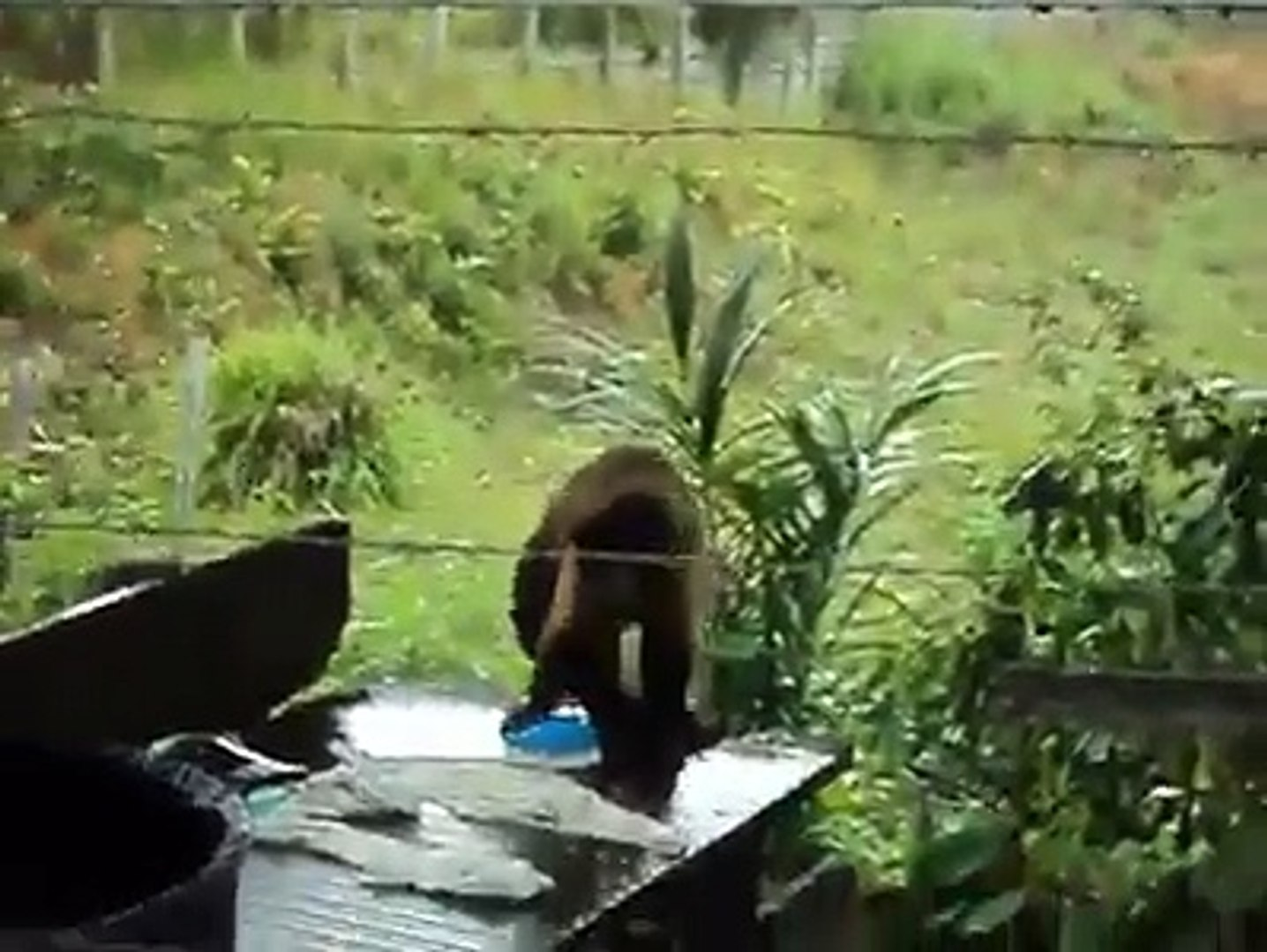 wash clothes by Monkey