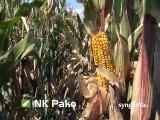 Hibridi za uspeh: NK Pako, NK Helico i NK Sycora_394_04.04.2015.