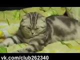قطة ما نامت من شهر ضحك موت تحشيش