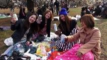 Cherry Blossoms Around Tokyo: Shibuya, Yoyogi and Inokashira ★ WAO✦RYU!TV ONLY in JAPAN