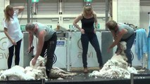 Sydney Easter Show Part 2 of 7 Sheep Shearing Show, 5 Apr 2015