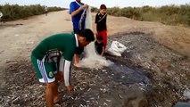 صيد سمك وفير في جنوب العراق.