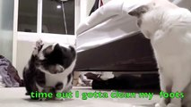 Cat barks like a dog at bubbles