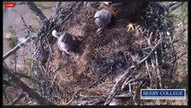 2015 03 04 Berry College Eagles:  Eaglets will be Eaglets