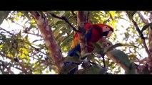 Turismo y Tours en Leticia Amazonas Colombia Amazonascolombia.com