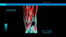 Opiaceos centrales de acción dual