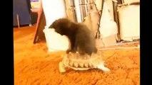 Funny Cats 2014 - Komik Kediler 2014