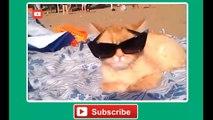 Funny Cats Part 1 - Komik Kediler 1. Bölüm