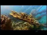Oceana: Protecting the World's Oceans (Narrated by Ted Danson)