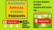 Funny Cats Compilation - Komik Kediler