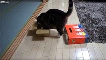 Ce chat japonais est vraiment très très étrange !