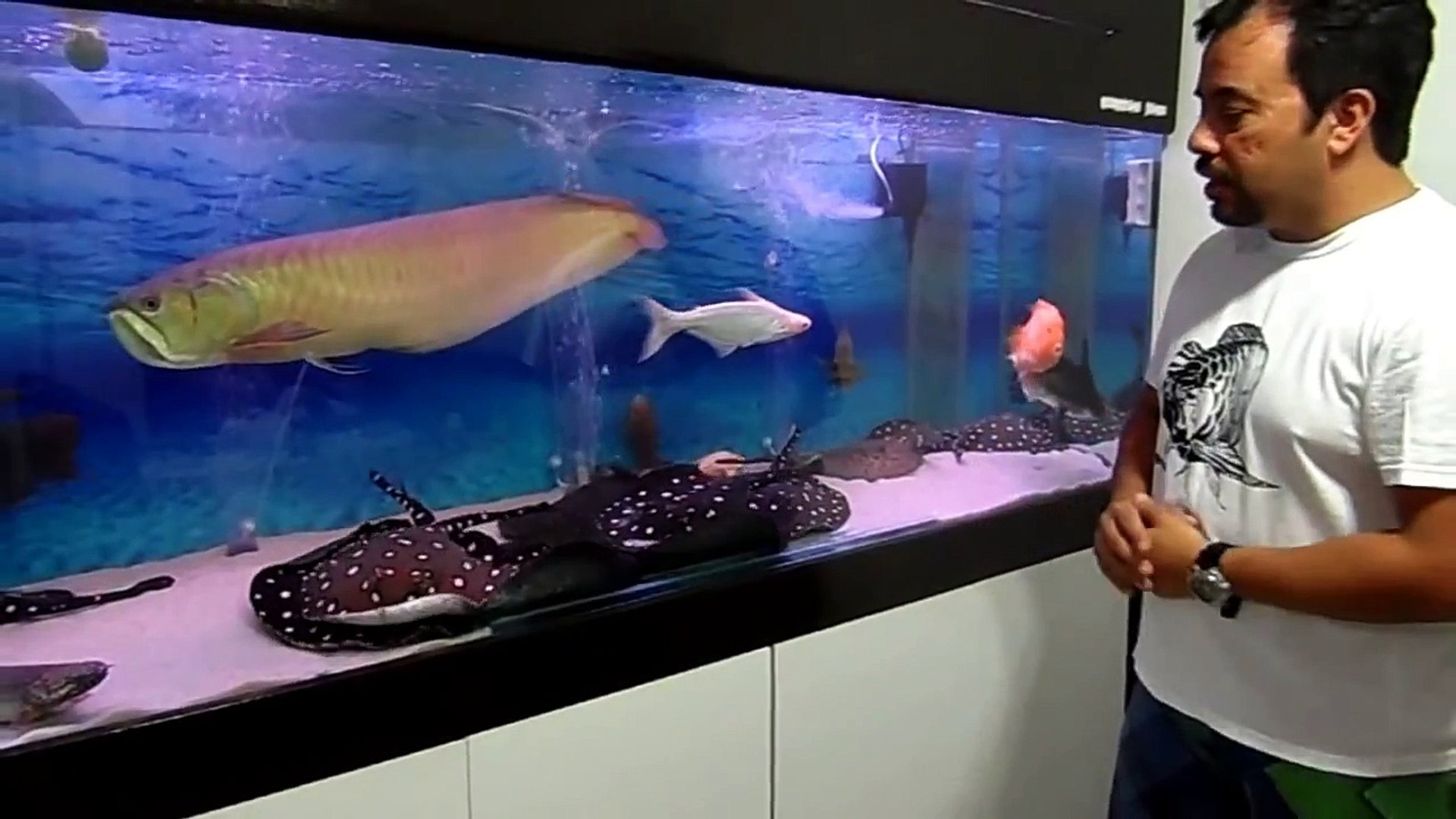 TV AQUARISMO JUMBO - Episódio 4 - Paulo Sergio -