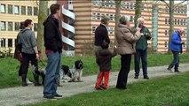 Razend grazende grasmaaiers van Groningen zijn weer terug in het straatbeeld - RTV Noord