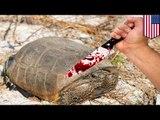 Mann verspeist bedrohte Schildkröten in Florida
