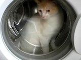 Cat In Washing Machine x
