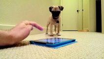 Application ipad qui fait des pets VS bébé chien = Grosse rigolade !