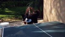 Ce chien joue au ping-pong mieux que personne...