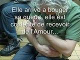 video#3 chiennes récupérées d'une usine à chien dans les laurentides au québec