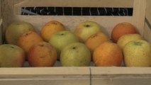 Comment conserver des pommes ? - Gourmand