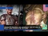 Cruauté envers les animaux: Un pittbul a reçu 1000 points de suture suite à une attaque