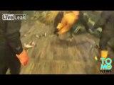 VIDEO: Un lion de mer a été pris dans les filets de marins pécheurs.