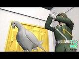 PASSE-TEMPS CHINOIS: Avant une cérémonie, Pékin organise des fouilles anales sur des pigeons