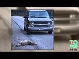 Tueur de loups: Un homme dans le Montana est fier d'avoir écrasé deux loups