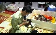 Baby Chimp, Chimpanzee Parenting - Primates In the City, #08, 침팬지의 육아