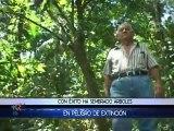 Un hombre rescata las especies de árboles en peligro de extinción