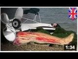 PETIT MEURTRE ENTRE AMIS: Un homme se fait démembrer par l'hélice d'un bateau