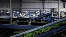 A lot of vegies from a little water: Recycling hydroponic 'waste water' on field crops