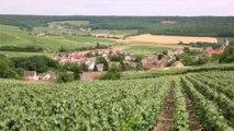 Adaptation au changement climatique dans le Parc naturel régional de la Montagne de Reims