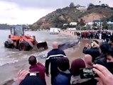 شاهد ما حصل في شاطئ سيدي بوسعيد