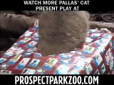 Presents to the Pallas Cats at Prospect Park Zoo