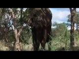 Animale in stare de ebrietate (animale bete)