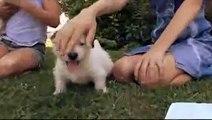 dogs 101 01-05a west highland white terrier [webrip lks].mkv