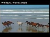 Windows 7 Sample Video - Wildlife