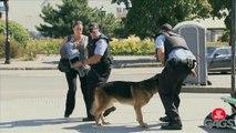 Rabid Dog Mauls Cop's Crotch