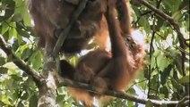 Green - Documentario sull'olio di palma e il disastro per animali e natura