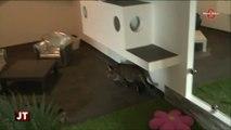 Insolite : Un hôtel 5 étoiles pour des chats (Savoie)