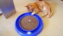 Ce chat s'amuse comme un fou avec son nouveau jouet