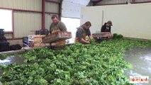 Finaliste Agriculteur Talents Gourmands Crédit Agricole Ile de France 2014
