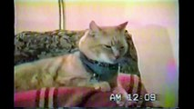 Singing Cat - Bob Seger - Old Time Rock N' Roll