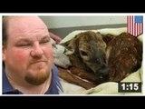 Un homme voit une biche enceinte se faire tuer et sauve son faon
