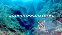 OCEANA: Documental. Especies Amenazadas