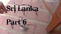 Visiting Colombo, Sri Lanka from Saudi Arabia - Part 6 | BaronBlackTV