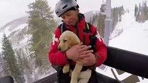 Ce bébé labrador est un Futur chien d'avalanche