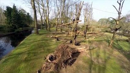 Un chimpanzé règle son compte à un drone trop énervant