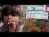 Dzieci na haju: rośnie liczna przypadków kontaktu dzieci z marihuaną